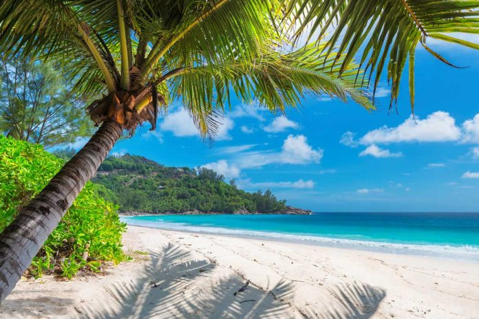 MycoMeditations is a psychedelic-retreat company in Treasure Beach, Jamaica, that facilitates 10-day trips where attendees take psychedelic, or